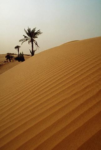 Desierto de Mauritania