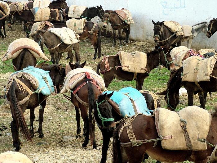 Des ânes pour accéder aux sites éloignés