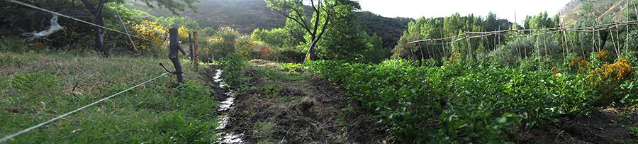 Huerta de la Alpujarra